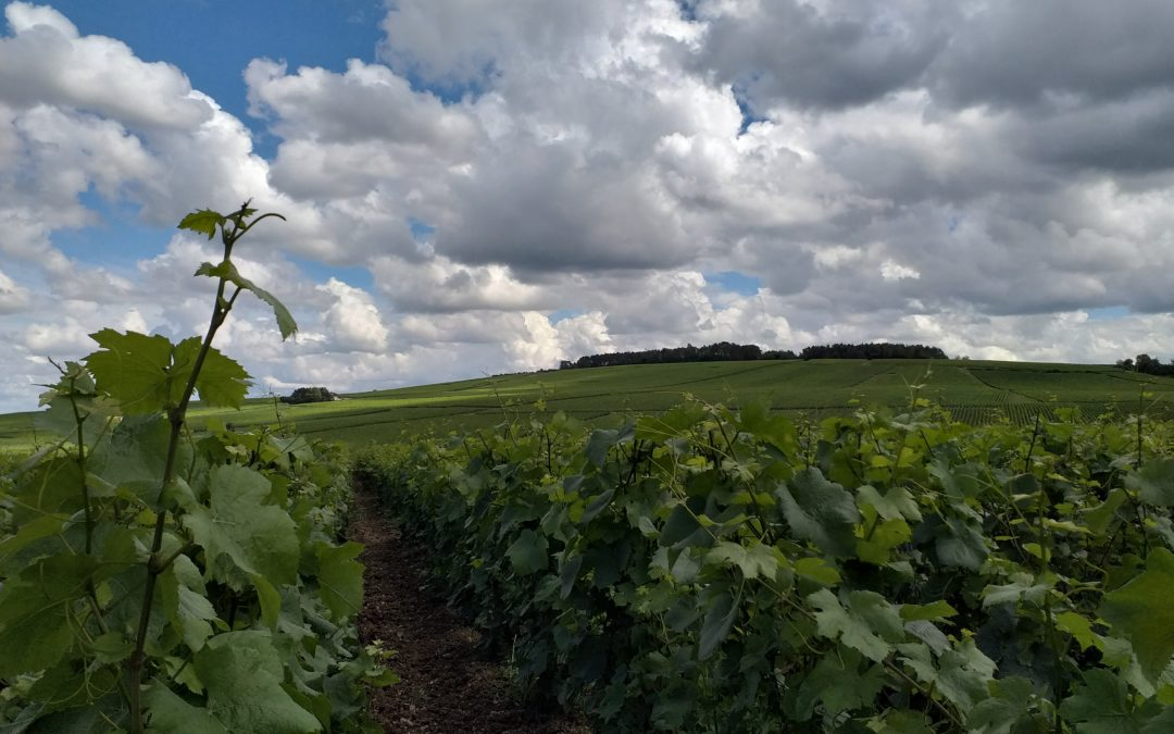 13 juillet 2021 – Vue sur les vignes